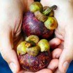 Mangosteen Superfood – pro hubnutí - lékárna – účinky – jak používat – kapky – akční – krém