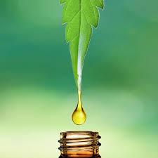 Ultra cbd extract - waar te koop - in kruidvat - de tuinen - website van de fabrikant? - in een apotheek