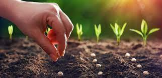 Agromax- cena - prodej - objednat - hodnocení