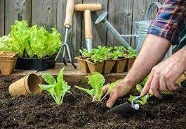 Agromax- zkušenosti - dávkování - složení - jak to funguje?